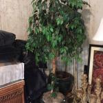 Tall artificial ficus tree