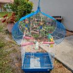 GREAT BIRD CAGE FOR A GREAT BIRD!