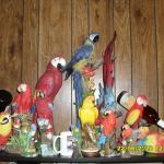 My  PARROT  collection