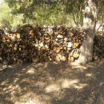 CUT FIRE WOOD READY TO PICK UP CLL( 970) 442-1307 IGNACIO,CO 81137