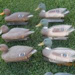 12 old Flambeau duck decoys