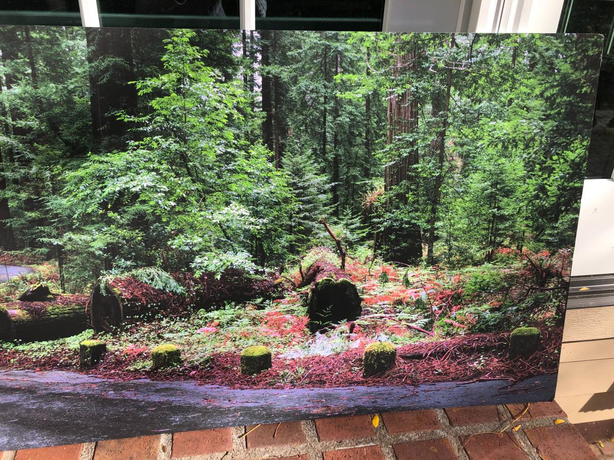Photo 3 of Large wall hanging - scenic / art/  picture