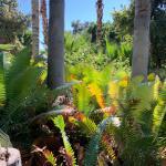 NURSERY PLANTS & TREES