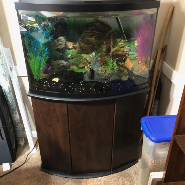 Photo of Aquarium