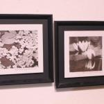 Lot 80 Pair of B&W Lily Prints