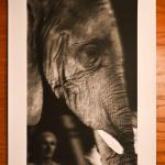 """Elephant #4"" by Kimberly Gremillion"