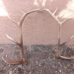 LOT 550 LARGE SET OF ELK ANTLERS