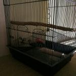 Bird cage in perfect condition with great accessories
