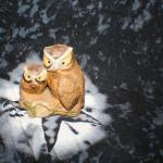2 Owls on a Log