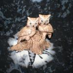 2 Owls on Stump