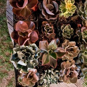 Photo of Succulents Backyard Sale