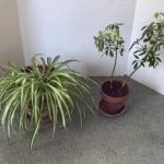 320 Two Live Potted Plants