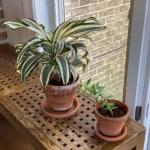 321 Live Bromeliad and Succulent Plants