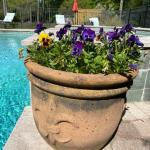 Lot #65 -- Terra Cotta Fleur de Lis pot with purple pansies