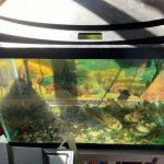 2 fish tanks 20 gallons