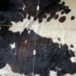 Nguni Cow Hide