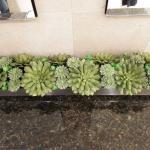 Decorative Succulent House Plants Bouquet - Wax with Ceramic Base