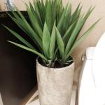 Decorative Yucca Plant - Wax - 2 Feet Tall