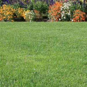 Photo of Clean Green Grass