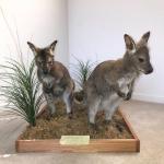 Wallaby's (Pair) or Sold Individually