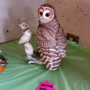Photo of Franklin mint owls
