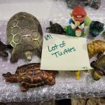 Lot of Turtles -Item# 691