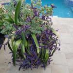 Glazed pot with plants