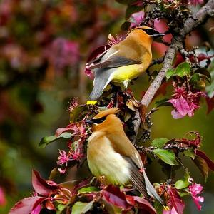 Photo of Love Birds