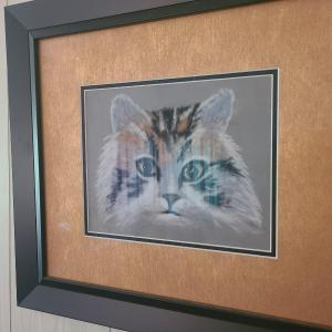 Photo of Cat Picture
