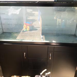 Photo of 55 gallon aquarium on stand