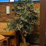 Nice Artificial Ficus