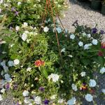Clearance! Flowering Baskets $5