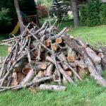 Free Apple Tree wood