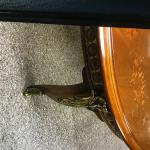 Antique Dining Room Table w/ chairs / padding and extenders Valued at $7000