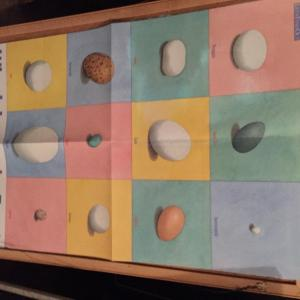 Photo of Retired Preschool Teacher's Treasures