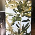 olive tree photo canvas (extra large)